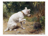 A Prickly Problem Premium Giclee Print by George Augustus Holmes