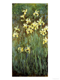 Yellow Irises Giclée-trykk av Claude Monet