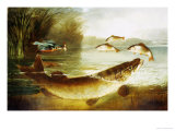 A Kingfisher and a Pike Capturing Perch Prints by Henry Leonides Rolfe