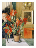 Brita&#39;s Cactus, 1904 Giclee Print by Carl Larsson
