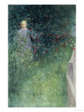 In the Hawthorn Hedge Print by Carl Larsson