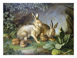 Hares and Leverets in a Rocky Lair Giclee Print by Johann Wenzel Peter