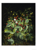 Wild Strawberries Print by Otto Diderich Ottesen