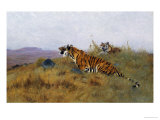 Tigers Stalking Their Prey Art by Wilhelm Kuhnert
