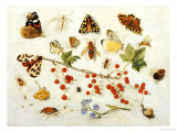 Butterflies, Moths and Other Insects with a Snail and a Sprig of Redcurrants, 1680 Reproduction procédé giclée par Jan Van Kessel