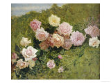 A Study of Roses Giclee Print by Luigi Rossi