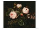Pink Roses Prints by Johan Laurentz Jensen