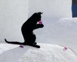 Cat and Flower Kunst van  Hubert & Klein