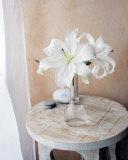 Weiße Lilien Kunstdrucke von Amelie Vuillon
