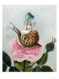 A Fairy Holding a Leaf, Sitting on a Snail Above a Rose Prints by Amelia Jane Murray