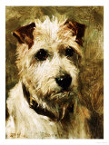 Portrait of a Terrier: Darkie, 1903 Giclee Print by John Emms