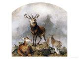 Scene in Braemar, Highland Deer Print by Edwin Henry Landseer