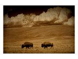 Buffalo Sky Lámina giclée por Jim Tunell