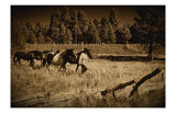 Bring the Horses Home Giclee Print by Jim Tunell
