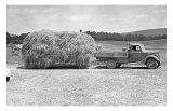 American Hay Farmer Giclee Print