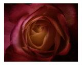 Midnight Violet Photographic Print by Scott Kuehn