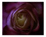 Midnight Blue Photographic Print by Scott Kuehn
