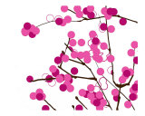 Pink blossoms Photographic Print by Estela Lugo