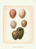 Bird Egg Study VI Posters