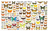 Butterflies of the World Chart Prints