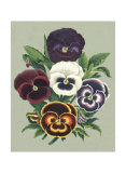 Tricolor Pansies I Prints