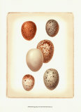 Bird Egg Study III Affiches