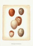 Bird Egg Study III Kunstdrucke