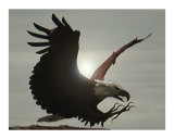 Montana Eagle Photographic Print by Diane Moore
