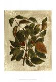 Printed Deshayes Trees II Posters