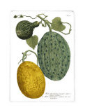 Antique Melons II Posters by  Weimann