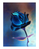 Blue Rose Photographic Print by John Fitzgerald