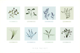 Eight Herbs Prints by Nina Farrell