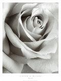 Rosa Posters af Steven N. Meyers