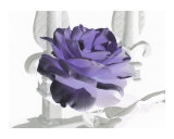 Purple Rose, Heavens Gate Photographic Print by Robert Sicotte