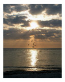 Evening Gulls Photographic Print by Christopher Pearson