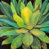Agave Poster by Jillian David
