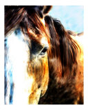 Horse Giclee Print by Harold Jones