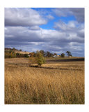 Golden Field Photographic Print by Wild Inspirations