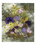 Morning Glory Giclee Print by Shelley Xie