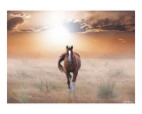Lassie Come Home Photographic Print by Bill Stephens