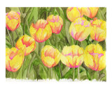 Yellow Tulips Giclee Print by Leighann Hill