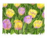 Mixed Tulips Giclee Print by Leighann Hill