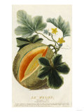 Pumpkin, 1787 Prints