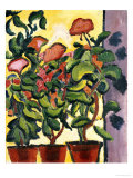 Geranium Am Fenster Prints by Auguste Macke