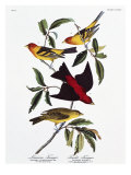 Louisiana Tanager and Scarlet Tanager Giclee Print by John James Audubon