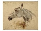 Testo Di Cavallo Giclee Print by Henri de Toulouse-Lautrec