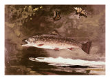 Fish Giclee Print by Winslow Homer