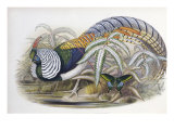 Lady Amherst's Pheasant Reproduction procédé giclée par John Gould