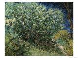 Lilac Bush Giclee Print by Vincent van Gogh