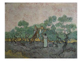 The Olive Pickers, Saint-Remy, c.1889 Reproduction proc&#233;d&#233; gicl&#233;e par Vincent van Gogh